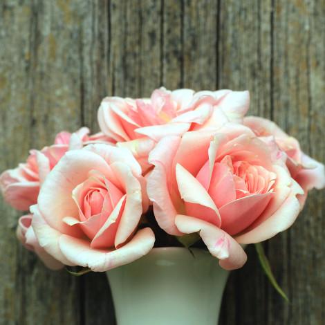 Tendance pastel, bouquet de roses